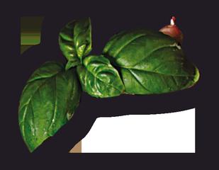 heyday-pizzeria-snina-bazalka